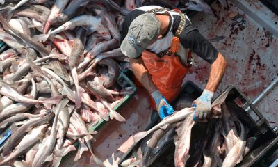 Behind the push to bring 'trash' fish to the dinner table